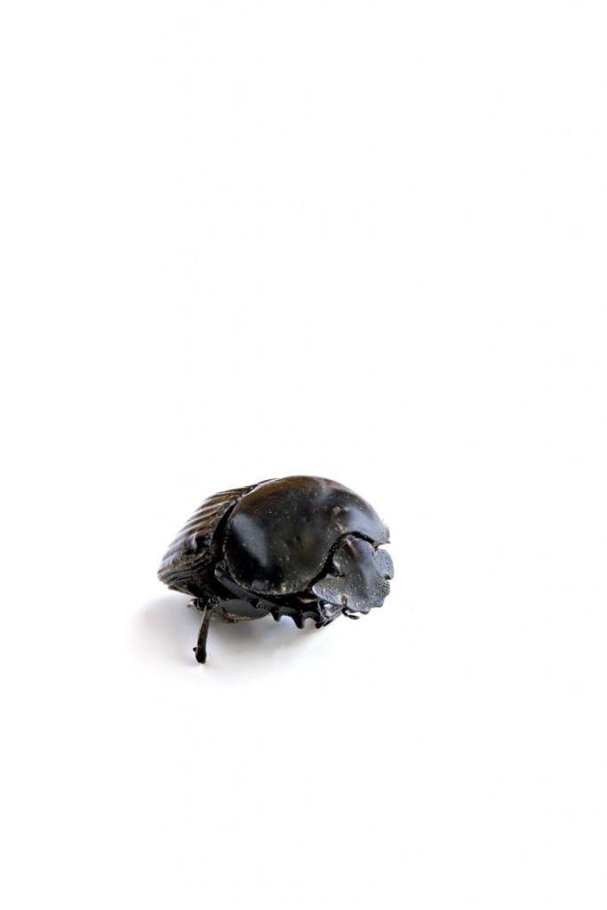 308 escarabajo