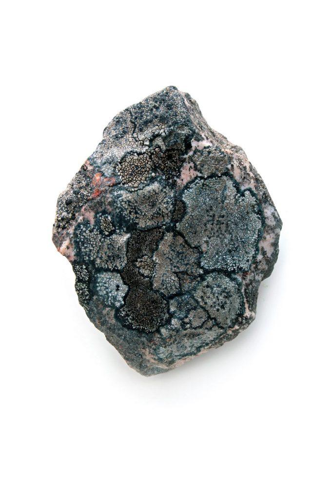 350 liquen roca