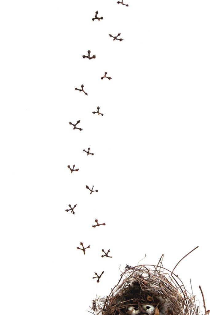 365 raspon nido
