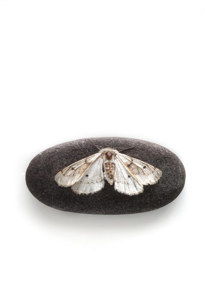 638 mariposa