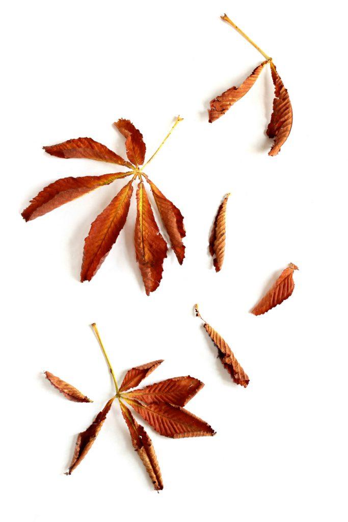 270 hojas castaño
