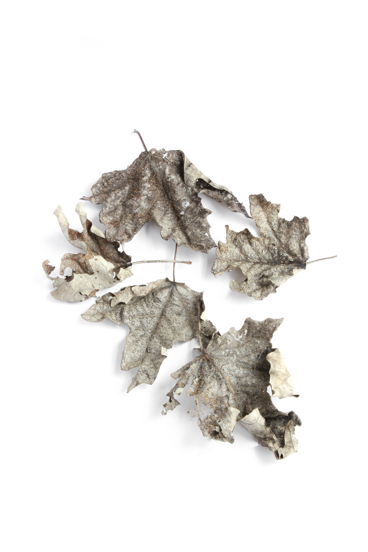 749 hojas secas_