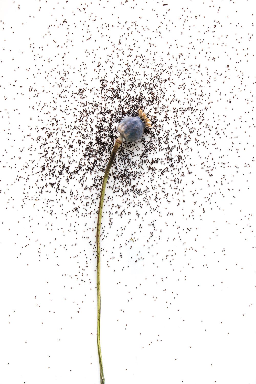784 semillas