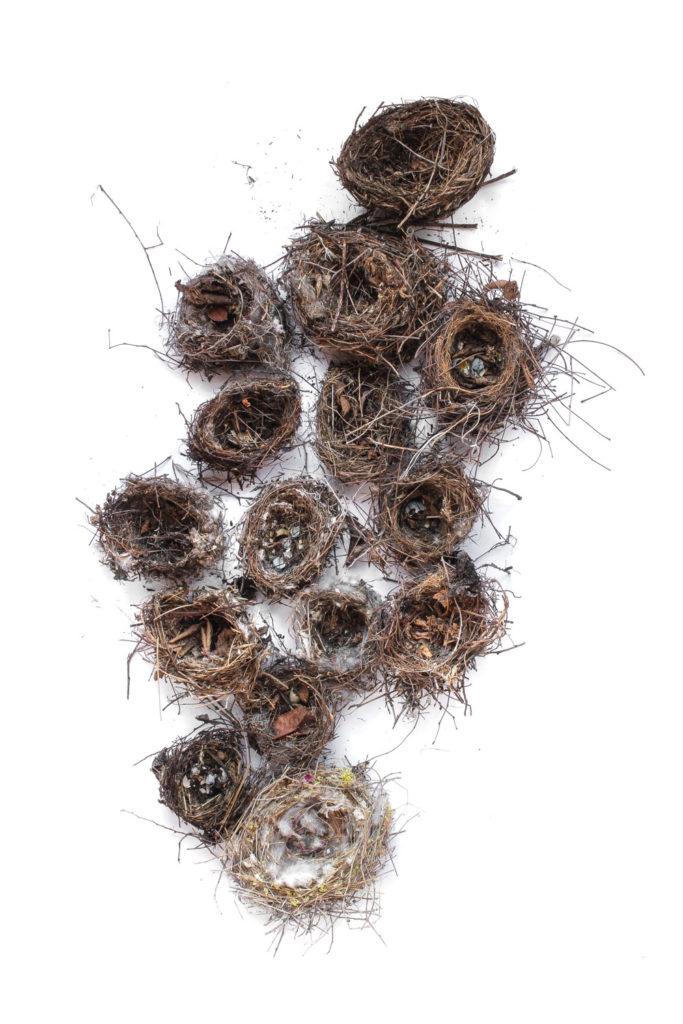 849 nidos