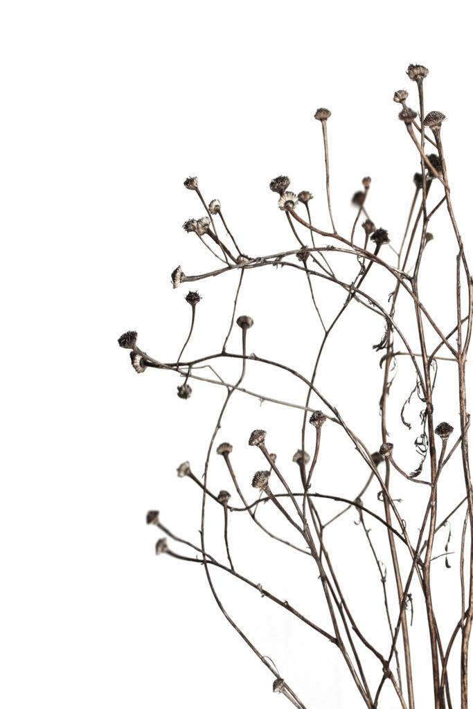 864 ramas secas