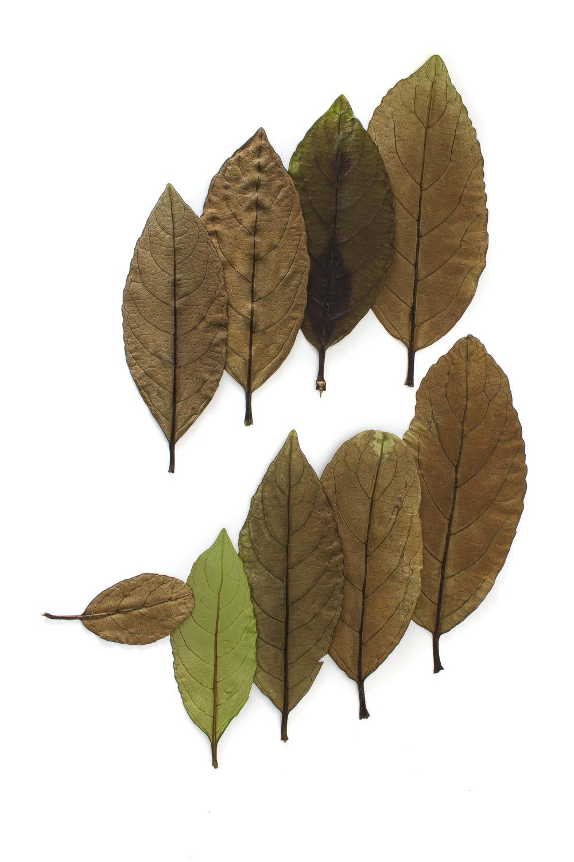 1019 hojas