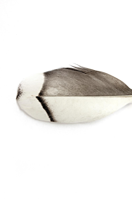 355 pluma ganso