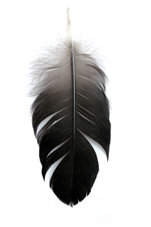 317 pluma negra