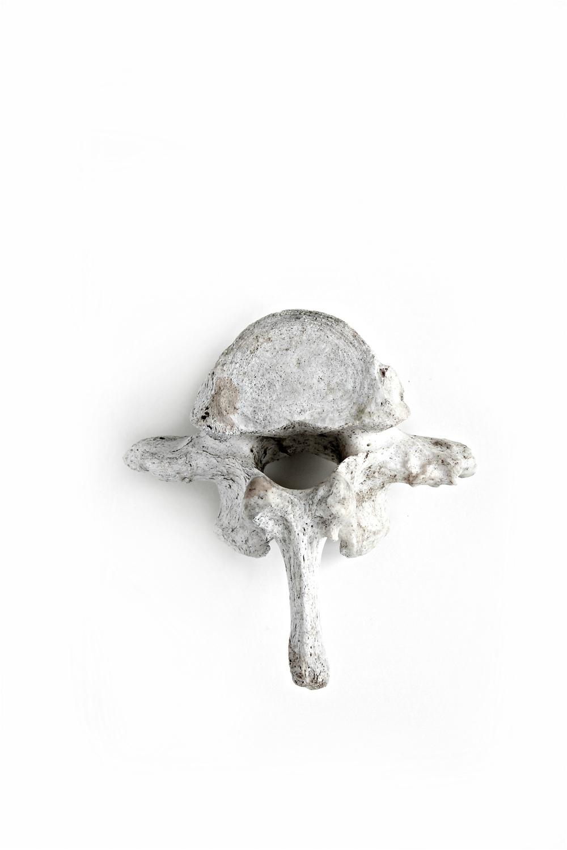 362 vertebra