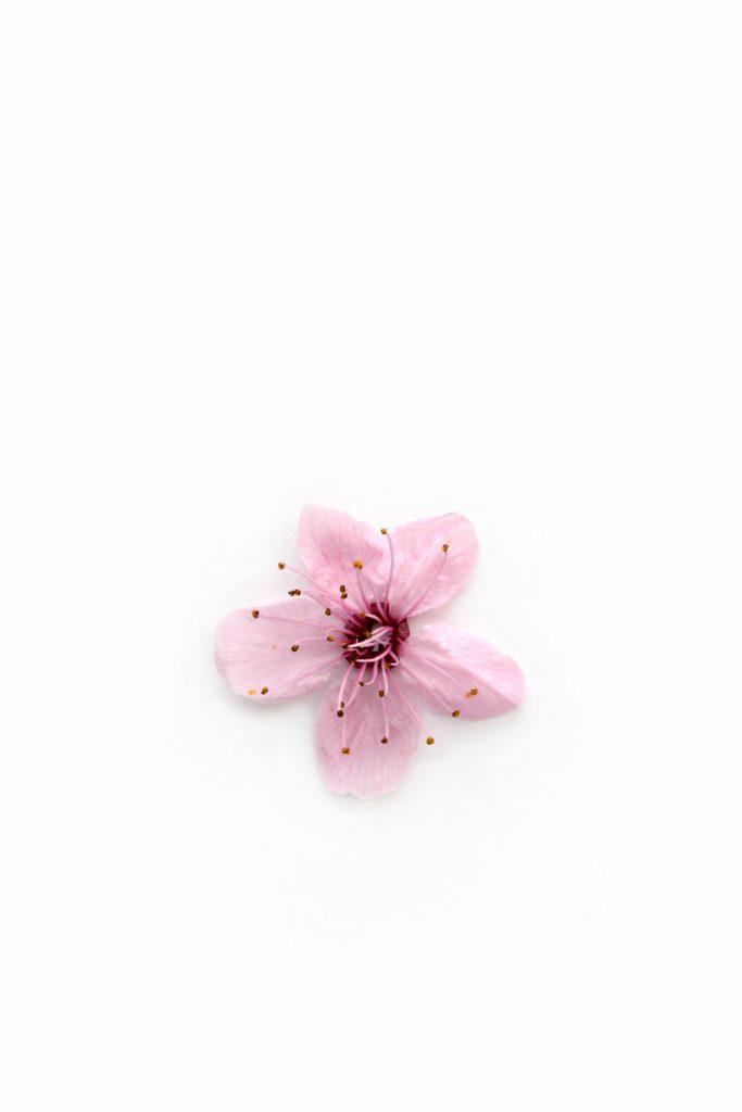 380 flor rosa