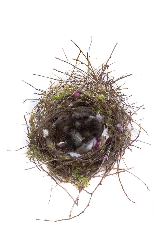 451 nido