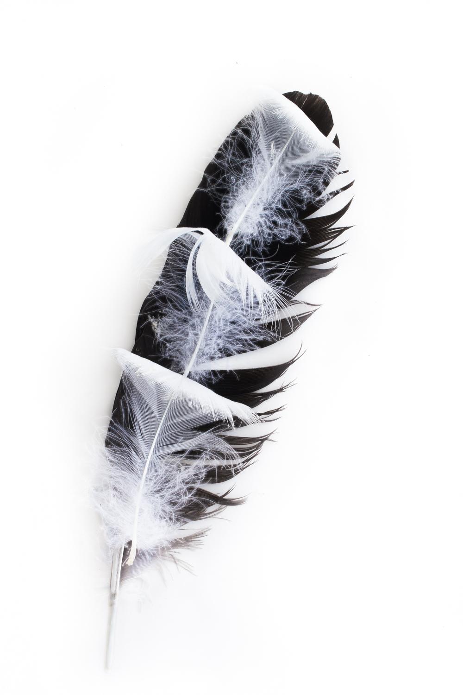 468 plumas