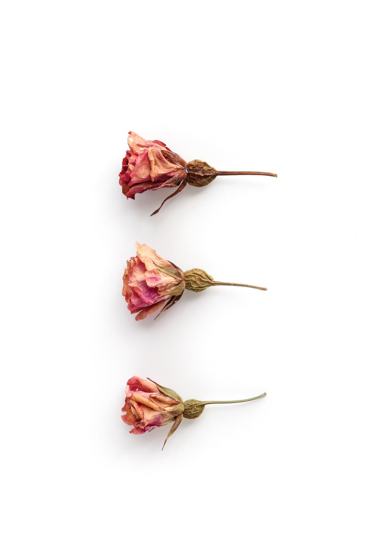 497-tres-rosas