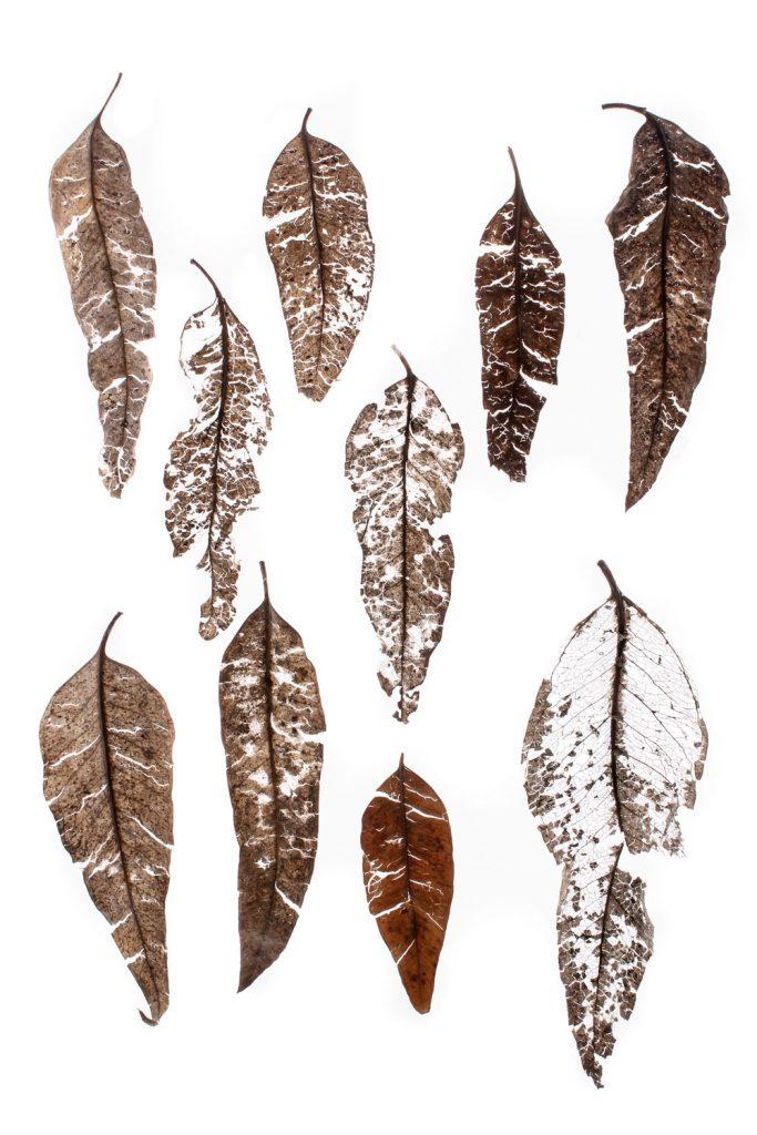 578 hojas