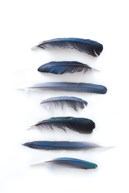 699 plumas