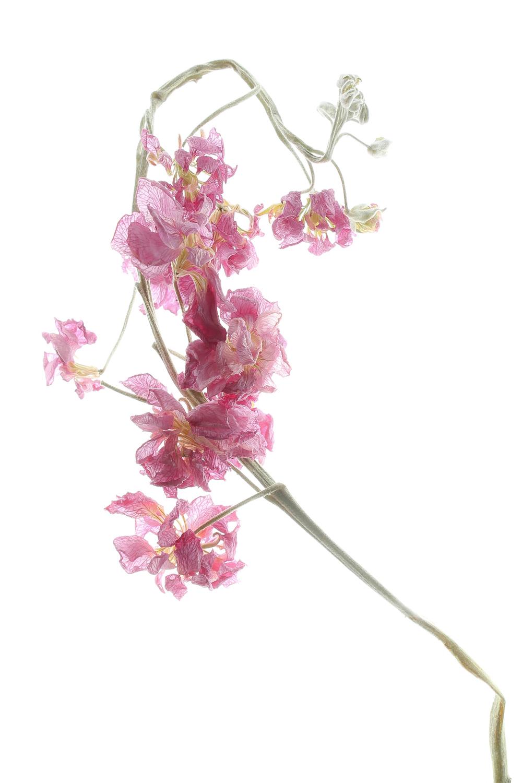 705 flor seca