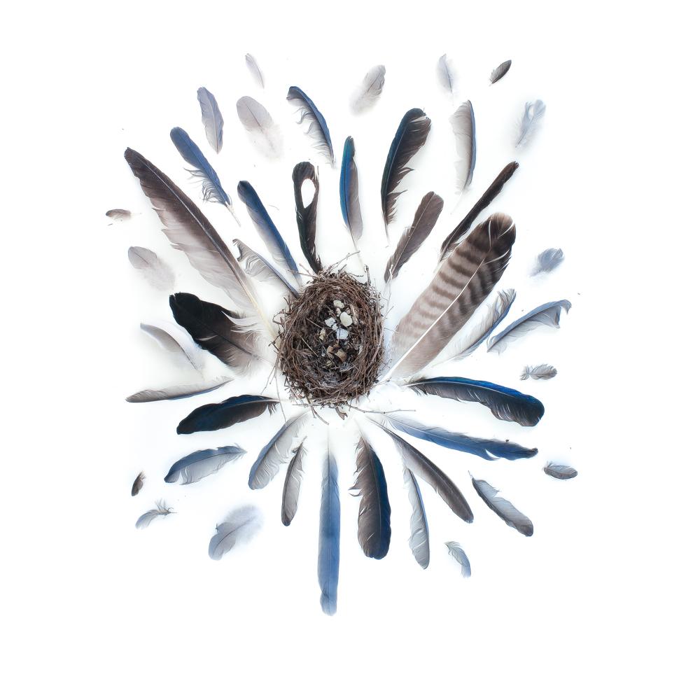 793 nido plumas