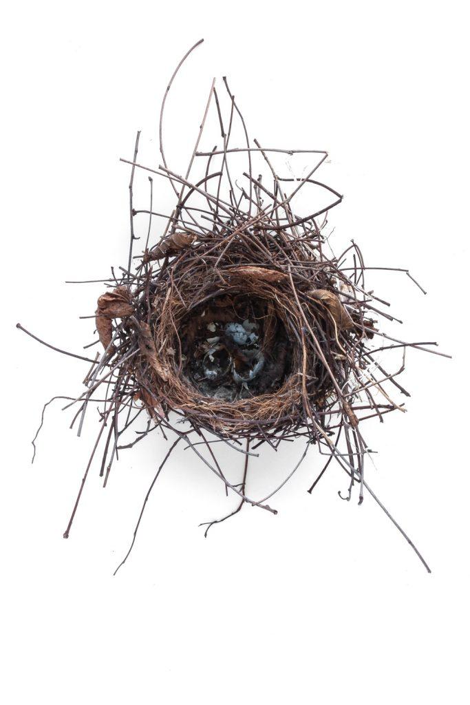 807 nido