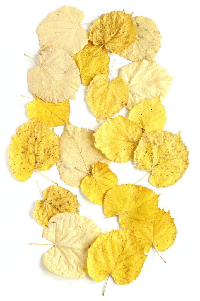 278tilo amarillo