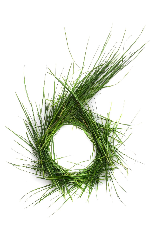 954 hierba