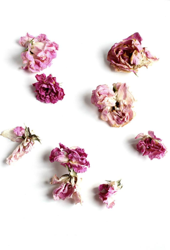 168 rosa rosae