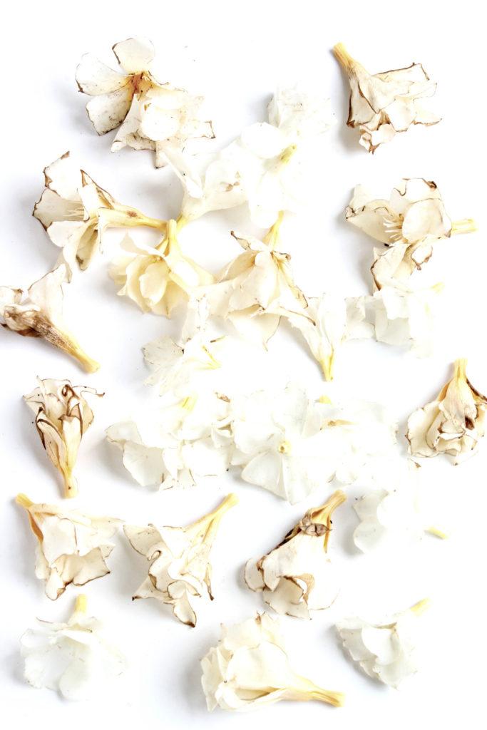 176 adelfa blanca