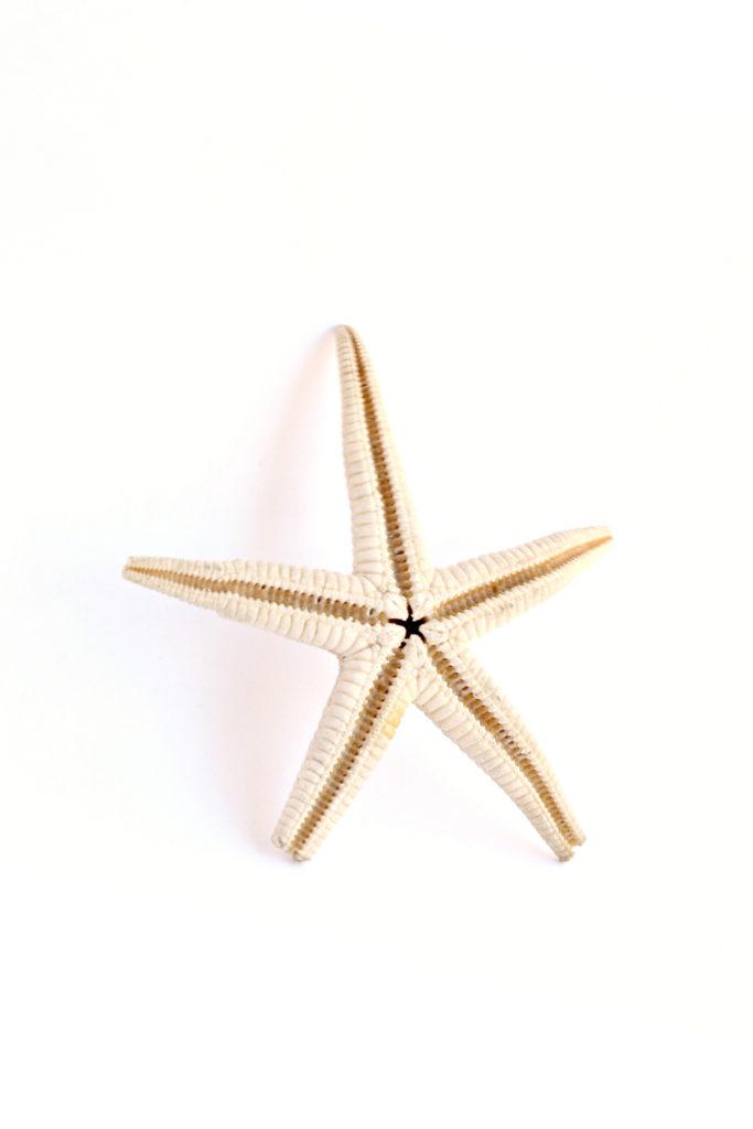 181 estrella mar