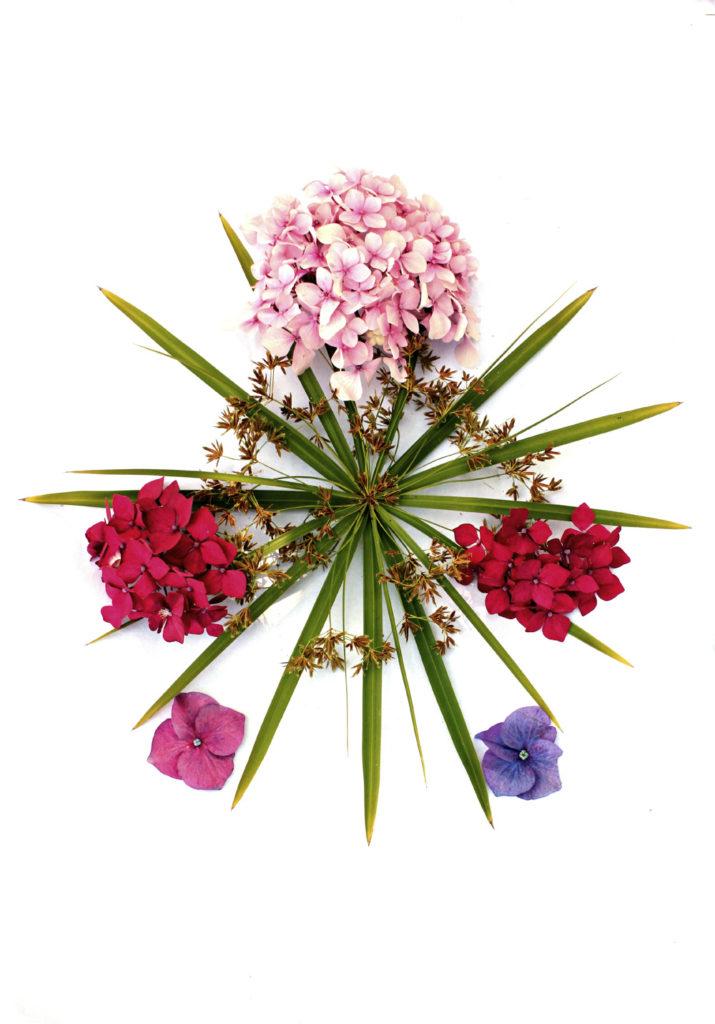 191 colección hortensias