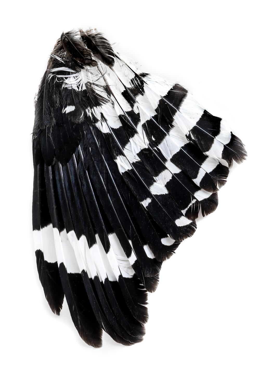 968 plumas