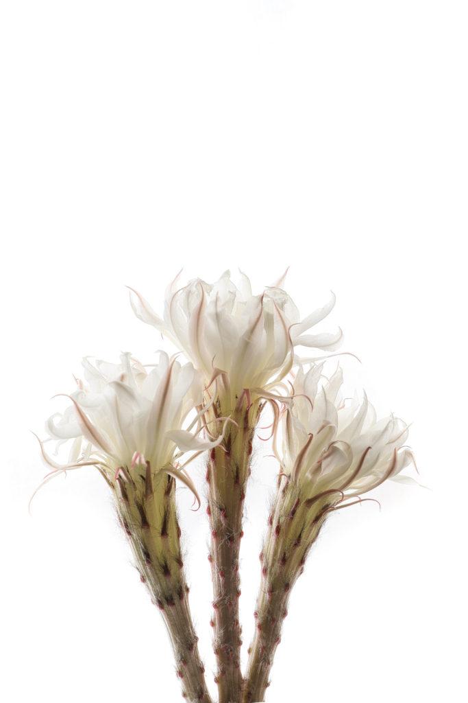991 cactus