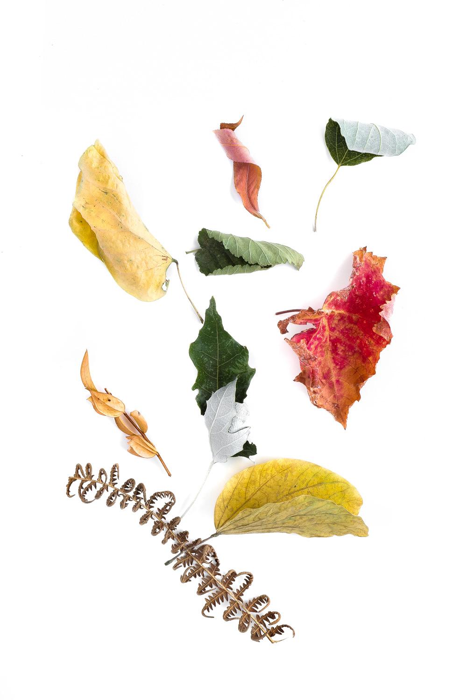 1017 hojas
