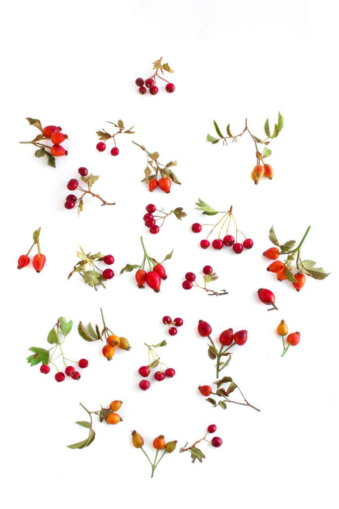 1021 frutos