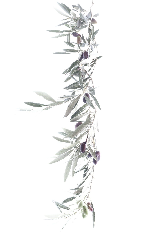 1056 olivo