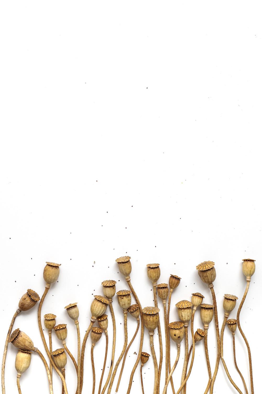 1078 cápsulas
