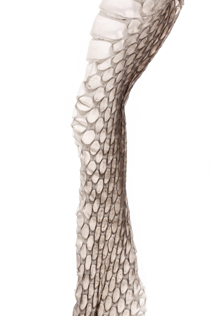 1105 serpiente