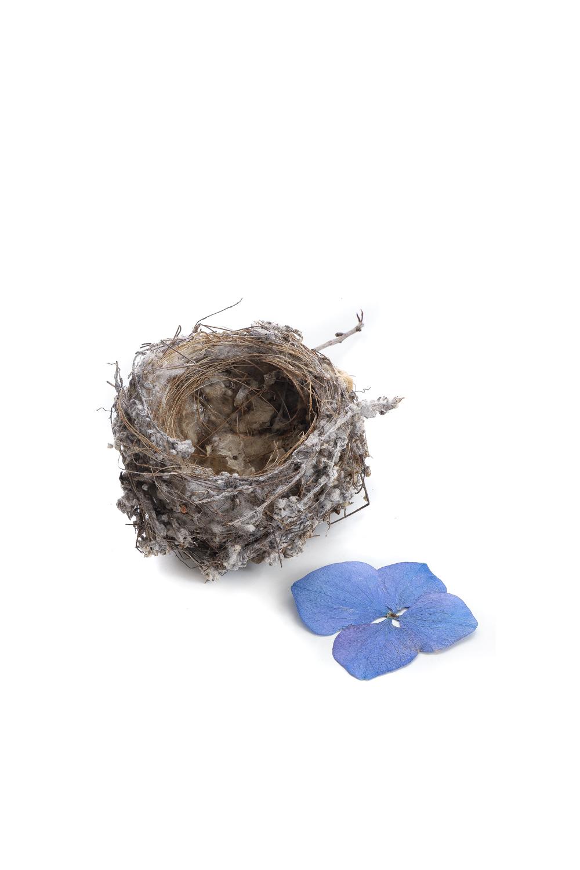 111i nido flor