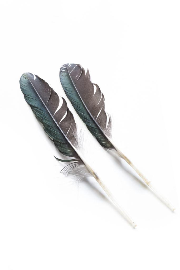 1124 plumas