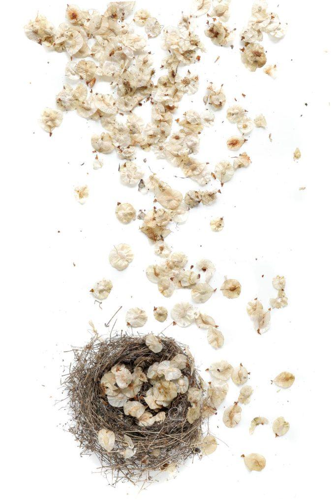 1162 nido frutos