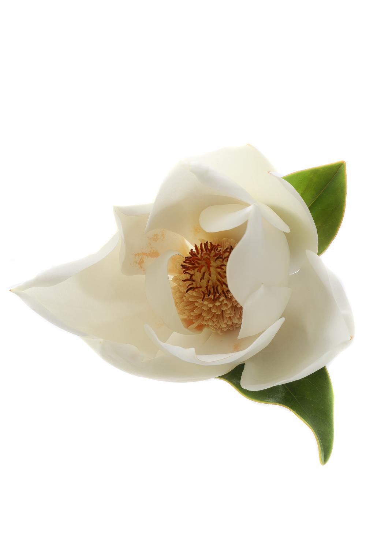 1211 magnolia