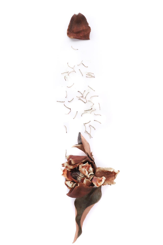 1219 magnolio