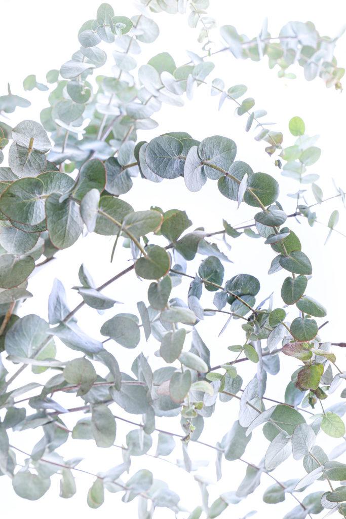 1282 eucalipto