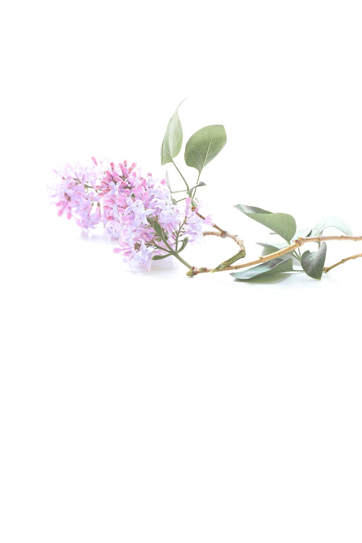 1284 lilas