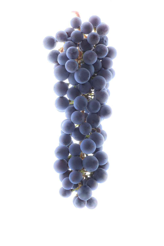 1285 uvas