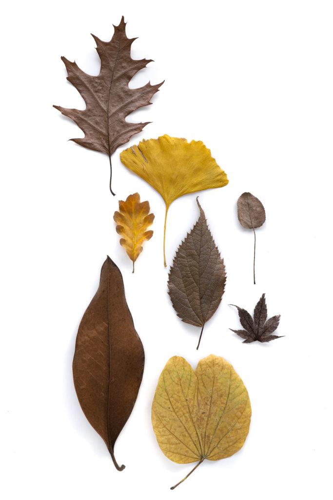 1286 hojas