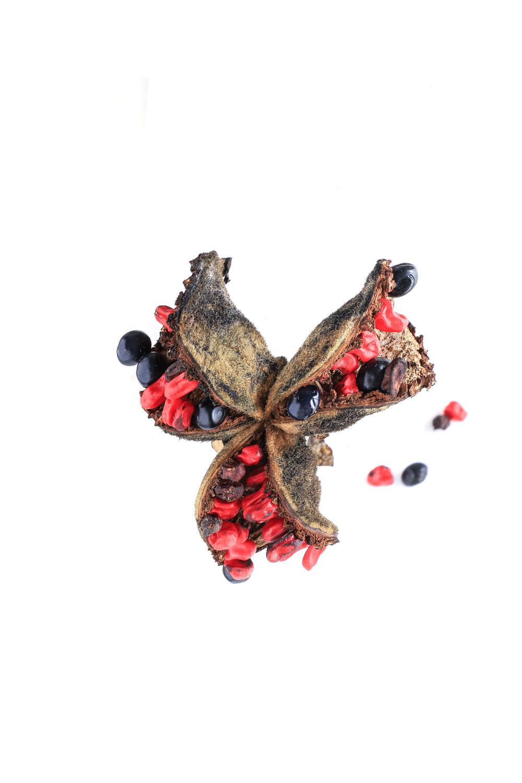 1306 frutopeonia