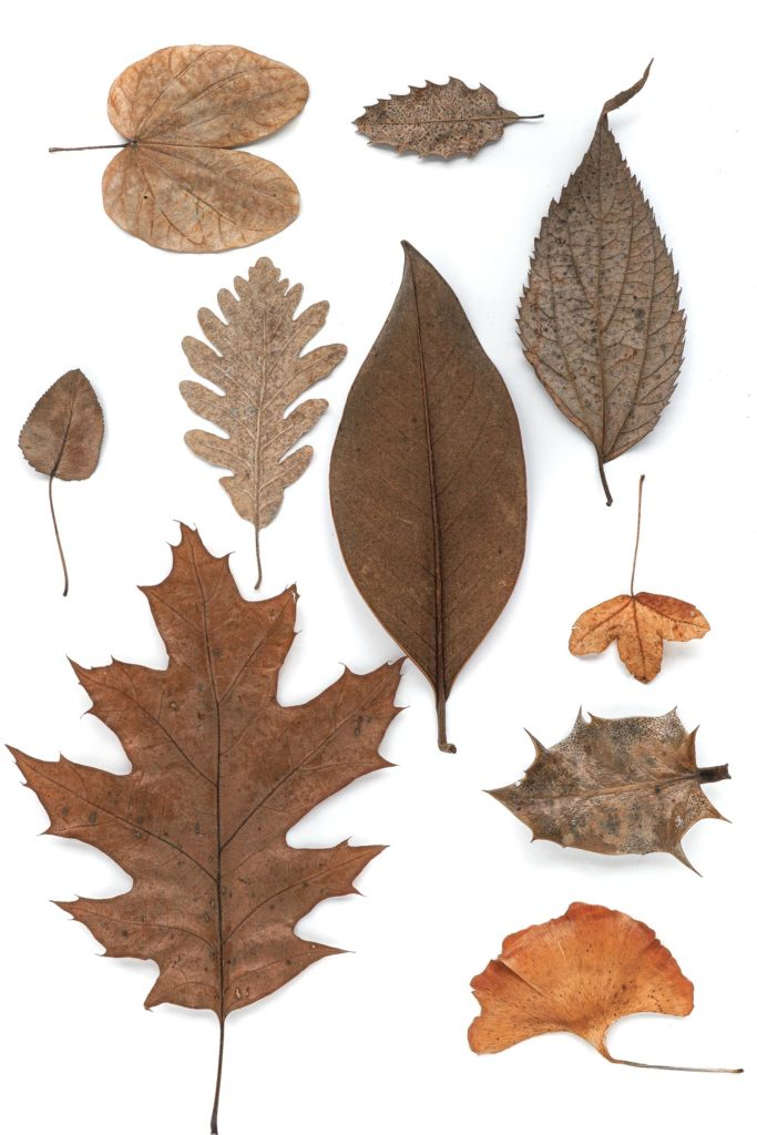 1321 hojas