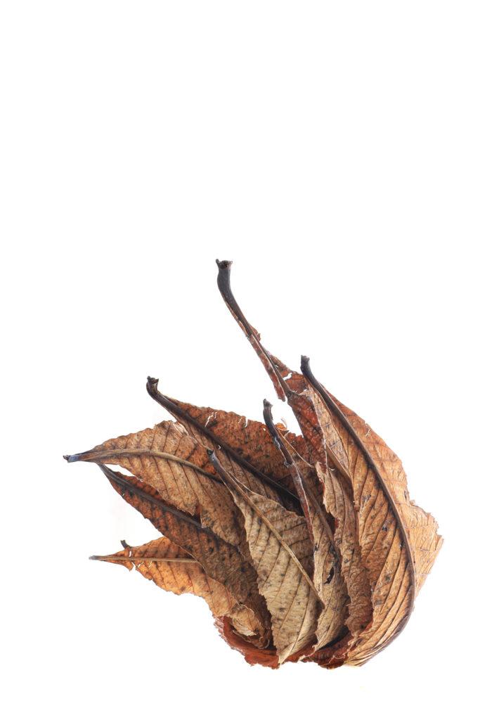 1338 hojas