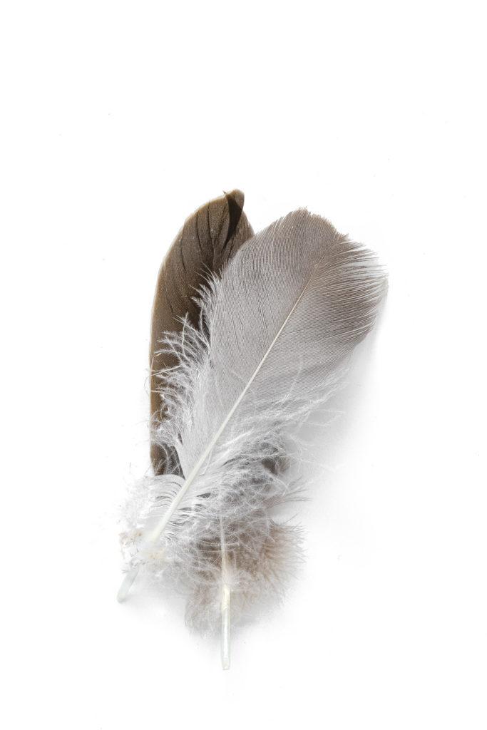 1354 plumas