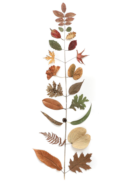 1360colección hojas