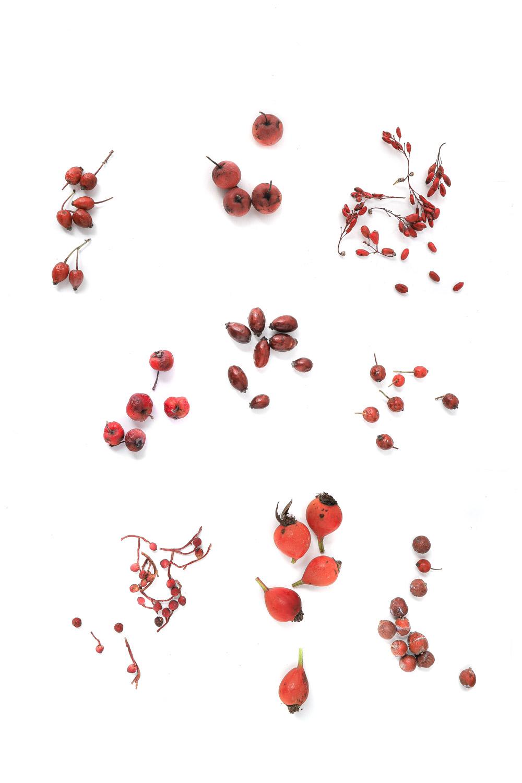 1371 frutos